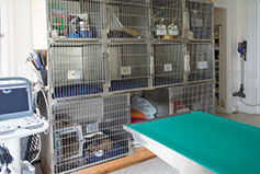 Dental Care in Milford, CT   Animal Clinic of Milford