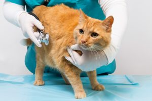 Nine Signs Your Pet Could Have Diabetes