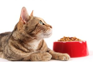 Don't Feed Your Pet These Foods!