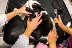 Laser Therapy for Pets
